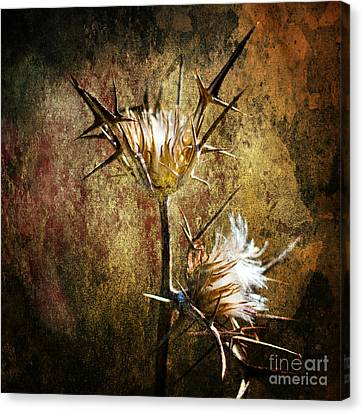 Thorns Canvas Print by Stelios Kleanthous
