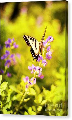 Those Summer Dreams Canvas Print by Darren Fisher
