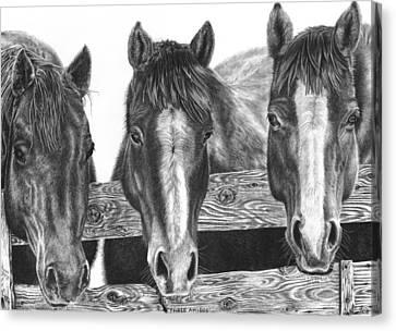 Three Amigos Canvas Print by Glen Powell