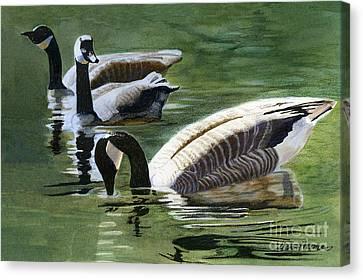 Three Canada Geese Canvas Print by Sharon Freeman