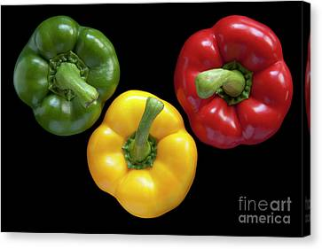 Three Colors Canvas Print by Heiko Koehrer-Wagner