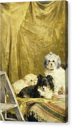 Three Dogs Canvas Print by Charles van den Eycken