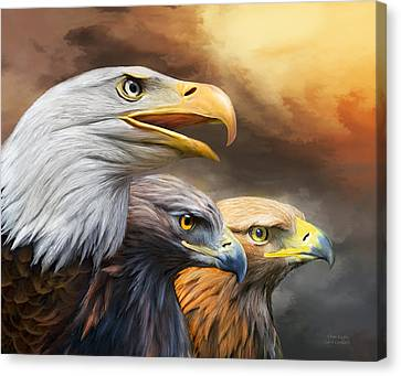 Three Eagles Canvas Print by Carol Cavalaris