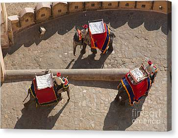 Three Elephants At Amber Fort Canvas Print by Inge Johnsson