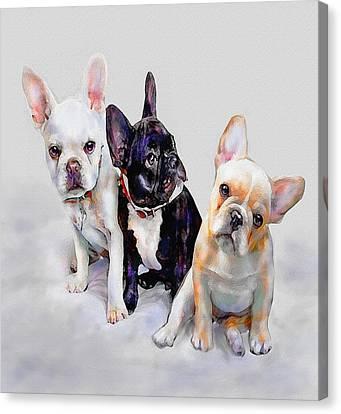 Three Frenchie Puppies Canvas Print by Jane Schnetlage