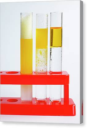 Three Glass Test Tubes In Stand Canvas Print by Dorling Kindersley/uig