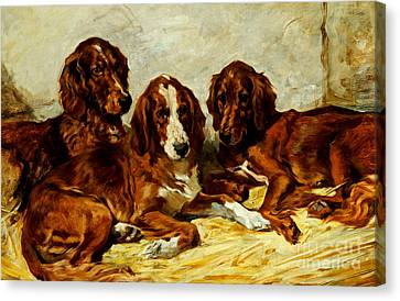 Three Irish Red Setters Canvas Print by John Emms