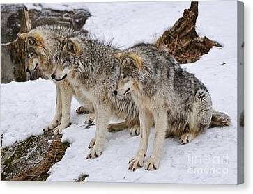 Three Kings Canvas Print by Wolves Only