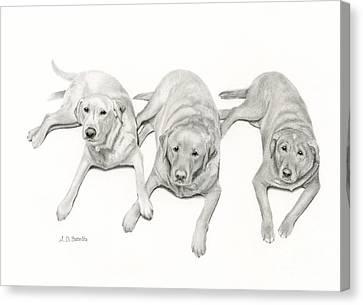 Three Of A Kind Canvas Print by Sarah Batalka