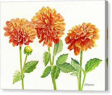 Three Orange Dahlias Canvas Print by Sharon Freeman