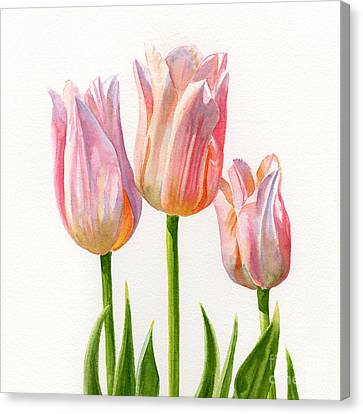 Three Peach Colored Tulips Square Design Canvas Print by Sharon Freeman