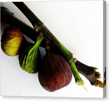 Three Stages Till Fully Ripe Canvas Print by Tina M Wenger