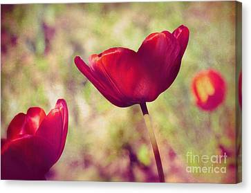Three Tulips Canvas Print by Silvia Ganora