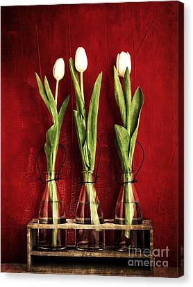 Three White Tulips Floral Canvas Print by Edward Fielding