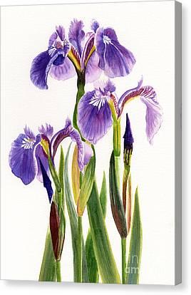 Three Wild Irises On White Canvas Print by Sharon Freeman