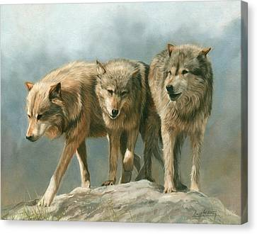 Three Wolves Canvas Print by David Stribbling