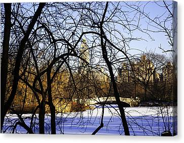 Through The Branches 3 - Central Park - Nyc Canvas Print by Madeline Ellis