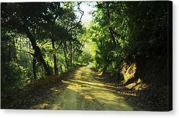 Through The Jungle Canvas Print by Aged Pixel