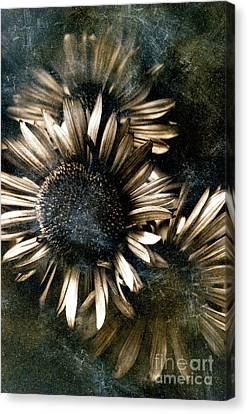 Through The Looking Glass Canvas Print by Venetta Archer