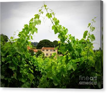 Through The Vines Canvas Print by Lainie Wrightson