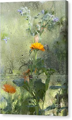 Through The Window  Canvas Print by Tim Gainey