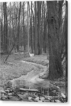 Through The Woods Canvas Print by Sara  Raber