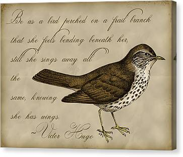 Thrush Bird Wall Art Canvas Print by Christy Beckwith