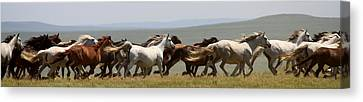 Thundering Herd Canvas Print by Crystal Socha
