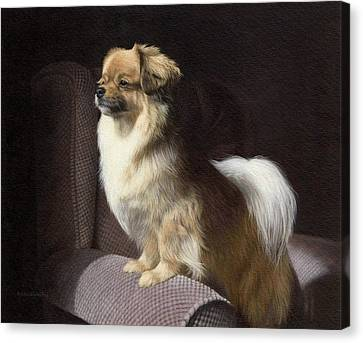 Tibetan Spaniel Painting Canvas Print by Rachel Stribbling