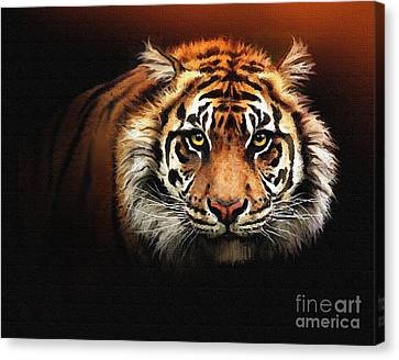 Tiger Bright Canvas Print by Robert Foster