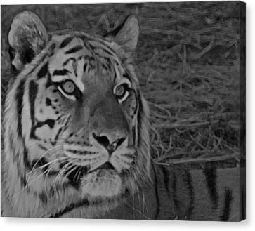 Tiger Bw Canvas Print by Ernie Echols