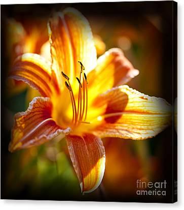 Tiger Lily Flower Canvas Print by Elena Elisseeva