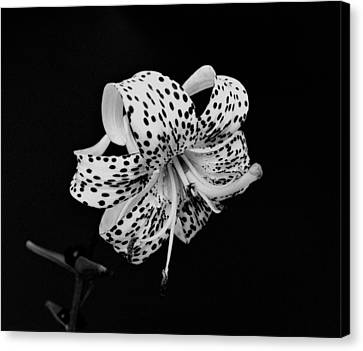 Tiger Lily In Black And White Canvas Print by Sandy Keeton