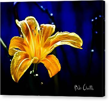 Tiger Lily On Waters Edge Canvas Print by Bob Orsillo