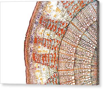 Tilia Stem Canvas Print by Garry DeLong