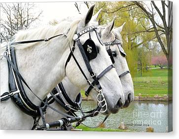 Tillie And Bruce #2 Canvas Print by Jeannie Rhode Photography