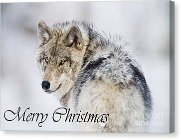 Timber Wolf Christmas Card 2 Canvas Print by Michael Cummings