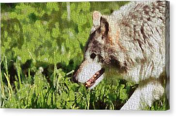 Timber Wolf Portrait On Canvas Canvas Print by Dan Sproul