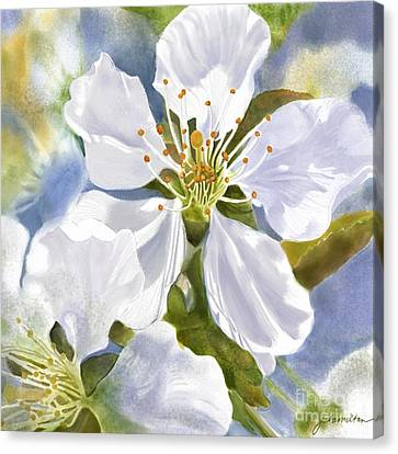 Time To Blossom Canvas Print by Joan A Hamilton