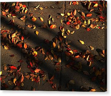 Timeless Canvas Print by Lucy D