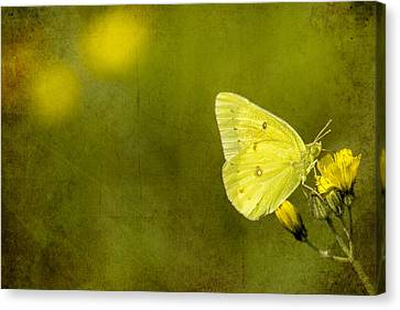 Tiny Green Dancer Canvas Print by Bill Tiepelman
