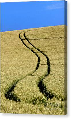 Tire Tracks In A Wheat Field. Auvergne. France. Canvas Print by Bernard Jaubert