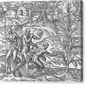 Tobacco Cultivation, 16th Century Canvas Print by Science Photo Library