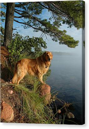 Toby On Point  Canvas Print by Sandra Updyke
