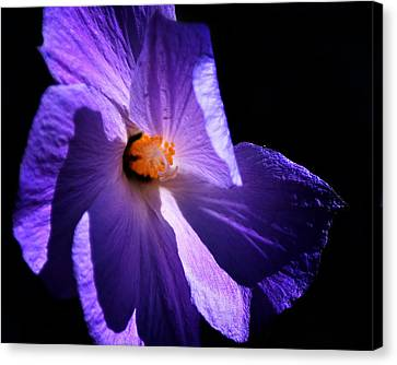 Todays'  Blessing Canvas Print by Camille Lopez