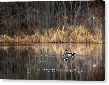 Together In The Swamp Canvas Print by Bill Wakeley