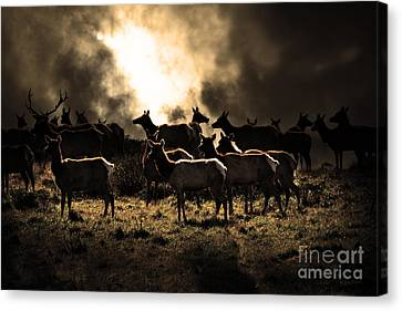Tomales Bay Harem Under The Midnight Moon - 7d21241 - Sepia Canvas Print by Wingsdomain Art and Photography