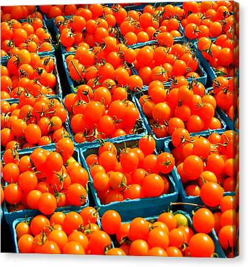 Tomato Squares Canvas Print by Mamie Gunning