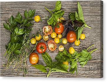 Tomatoes And Herbs Canvas Print by Elena Elisseeva