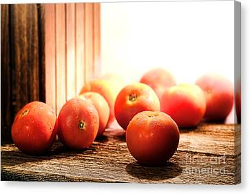 Tomatoes In An Old Barn Canvas Print by Olivier Le Queinec